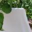 UUS! Soonikkangas. Kreemjasvalge (laius 165 cm)